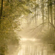 River in misty autumn forest — Stock fotografie