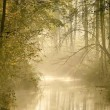 River in misty autumn forest — Stock Photo #2598527