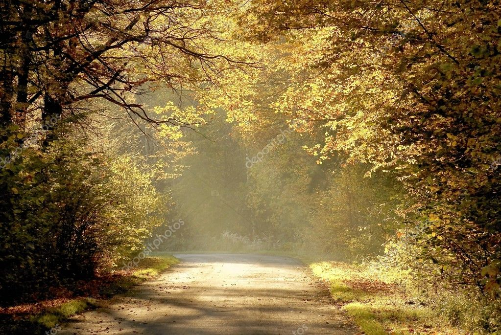 Country road through the autumn forest with oak trees backlit by the rays of sunrise.  Stockfoto #2594229
