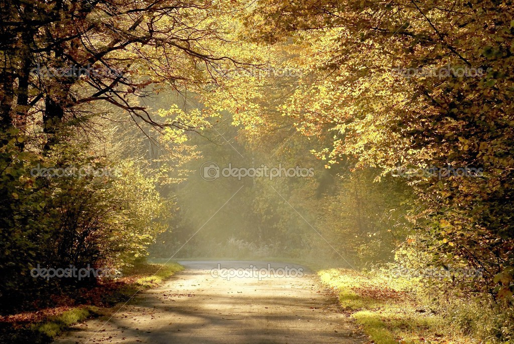Country road through the autumn forest with oak trees backlit by the rays of sunrise.  Stock Photo #2594229
