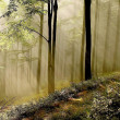 Sunlight falls into misty forest — Stock Photo #2679089