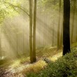 Sunlight falls into misty forest — Stock Photo