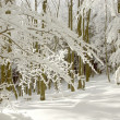 Sunny winter forest — Stock Photo