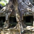Stock Photo: Tree with enormous roots at Angkor