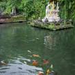 Pond and fish in a temple in Bali — Stock Photo