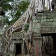 Enormous tree roots at Angkor - Stock Photo