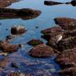 Stock Photo: Rocks with red algae at low tide