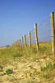 Wood picket barrier in french dunes — Stock Photo
