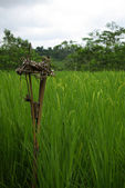Balinese offering in a ricefield — Stock Photo