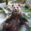 Stock Photo: Grizzly Bear posing