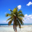 Palm tree on beach — Foto de Stock