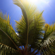 Palm tree — Photo #1881767