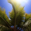 Palm tree — Stockfoto #1881767