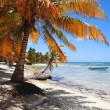 Tropical beach at Punta Cana - Stock Photo