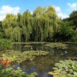 Pond and garden — Stock Photo