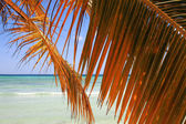 Palm branch on beach — Stock Photo