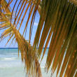 Stock Photo: Palm branch on beach