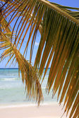 Palm branch on beach — Stock Photo