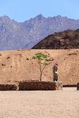 Jovem beduíno — Foto Stock