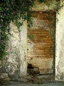 Old medieval door in ivy — Stock Photo