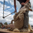 Sheep shearing — Stock Photo