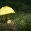 Mushroom in Sunshine — Stock Photo