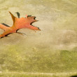 Oak Leaf on Rock 2 — Stock Photo #1922609