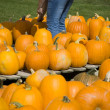 Stock Photo: Picking Pumpkins