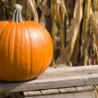 Crate with Pumpkin — Stock Photo #1922697
