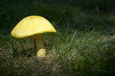 Mushroom in Sunshine — Stock Photo