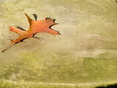 Oak Leaf on Rock 2 — Stock Photo