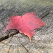 Maple leaf on Stump — Stock Photo #1937422