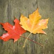 Orange and Yellow Maple — Stock Photo #1937427