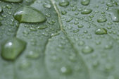 Leaf with water droplets Macro — Stock Photo