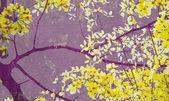 Golden shower tree on purple wall — Stock Photo