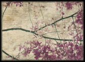 Pink and purple blossom background — Stock Photo