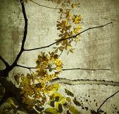 Yellow grunge kerala blossom — Stock Photo