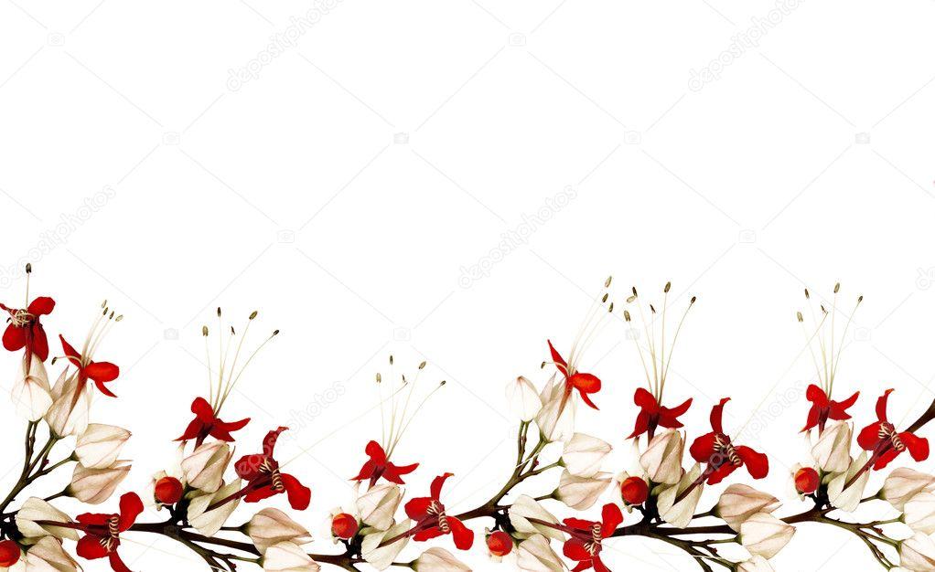 红色和黑色蝴蝶花卉边框