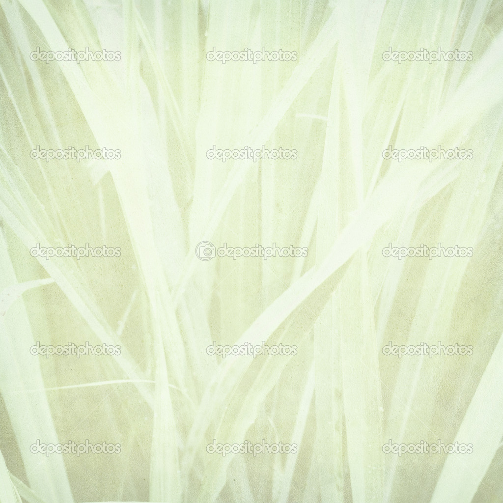 Pale lemongrass print on paper textured background — Stock Photo #2227766