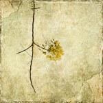 Yellow blossom branch — Stock Photo