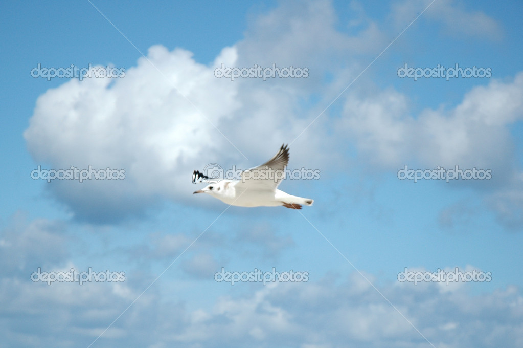 One seagull in the sky — Stock Photo #1940895