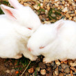 Stock Photo: Bunnies