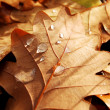 Autumn leaf with dew — Stock Photo