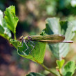 Dragonfly — Stock Photo #1987818