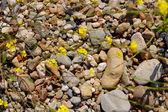 Stones and flowers — Stock Photo