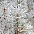 Fir in snow — Stock Photo #2019933