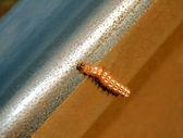 Caterpillar — Stock fotografie