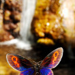 Butterfly — Stock Photo #2029792