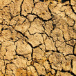 Barren earth texture — Stock Photo
