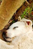 Stray puppy — Stock Photo
